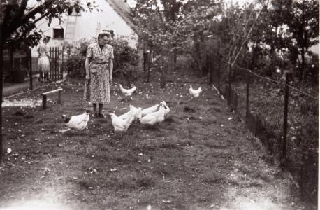 Auch die Ertrage aus der Kleinviehzucht halfen, den täglichen Speiseplan in den Kriegsjahren und Nachkriegsjahren zu verbessern. (Hameke)