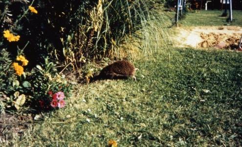 Auch die Tier und Pflanzenwelt in den Gärten hat sich gewandelt... (Preihs 1987)